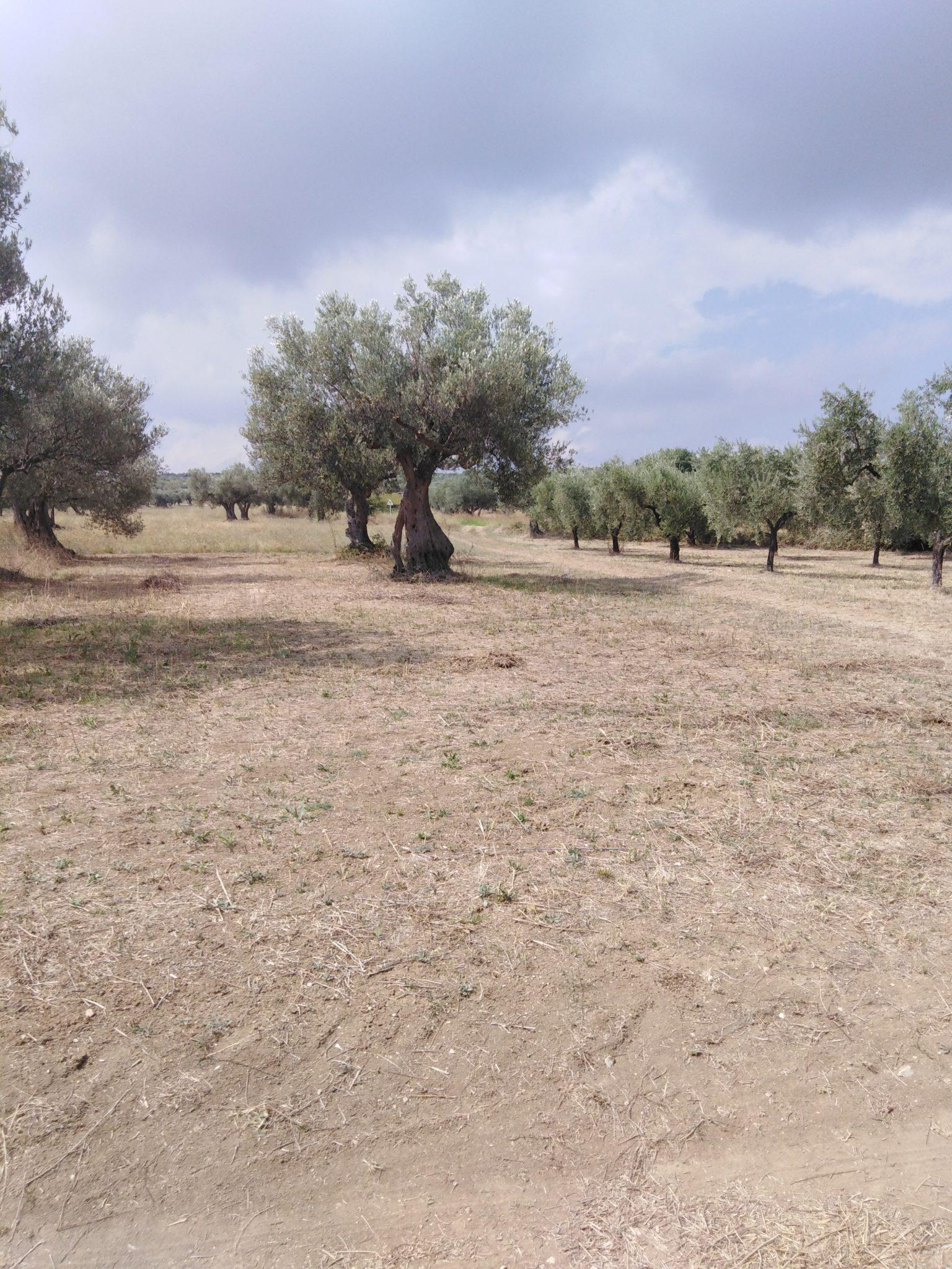 Terreno agricolo in vendita a Mozzagrogna